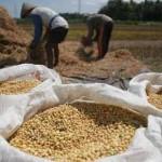 Ketua Bidang Ekonomi Ahlulbait Indonesia : Mengatasi Kelangkaan Kedelai, Perpendek Distribusi