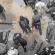 Parasitisme Takfiri Suriah (Bagian Pertama): Ketika Pion Saling Terkam