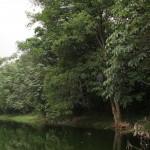 Danau Universitas Indonesia