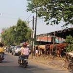 Curhat Pedagang Hewan Qurban Ibu Kota