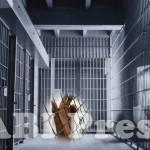 Anak Palestina dipenjara Israel
