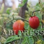 5 Khasiat Tomat Untuk Kesehatan