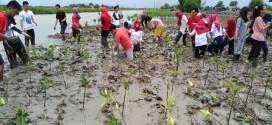 Tanam Mangrove Wujud Cinta Alam